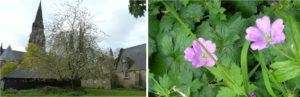 St Mary's Cathedral & Herb Robert
